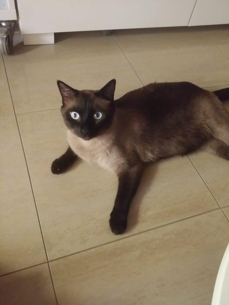 Sushi, mi amor de gato gordito