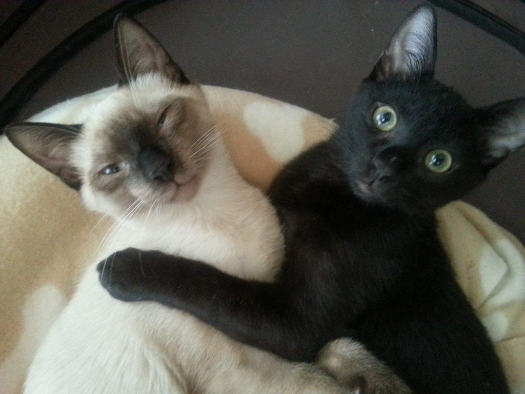 Blaky Y Sushi, los gatos de OrdenEnCasaYMascotas.online
