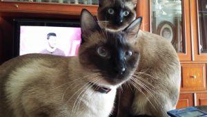 Hidratos de carbono en los piensos para gatos