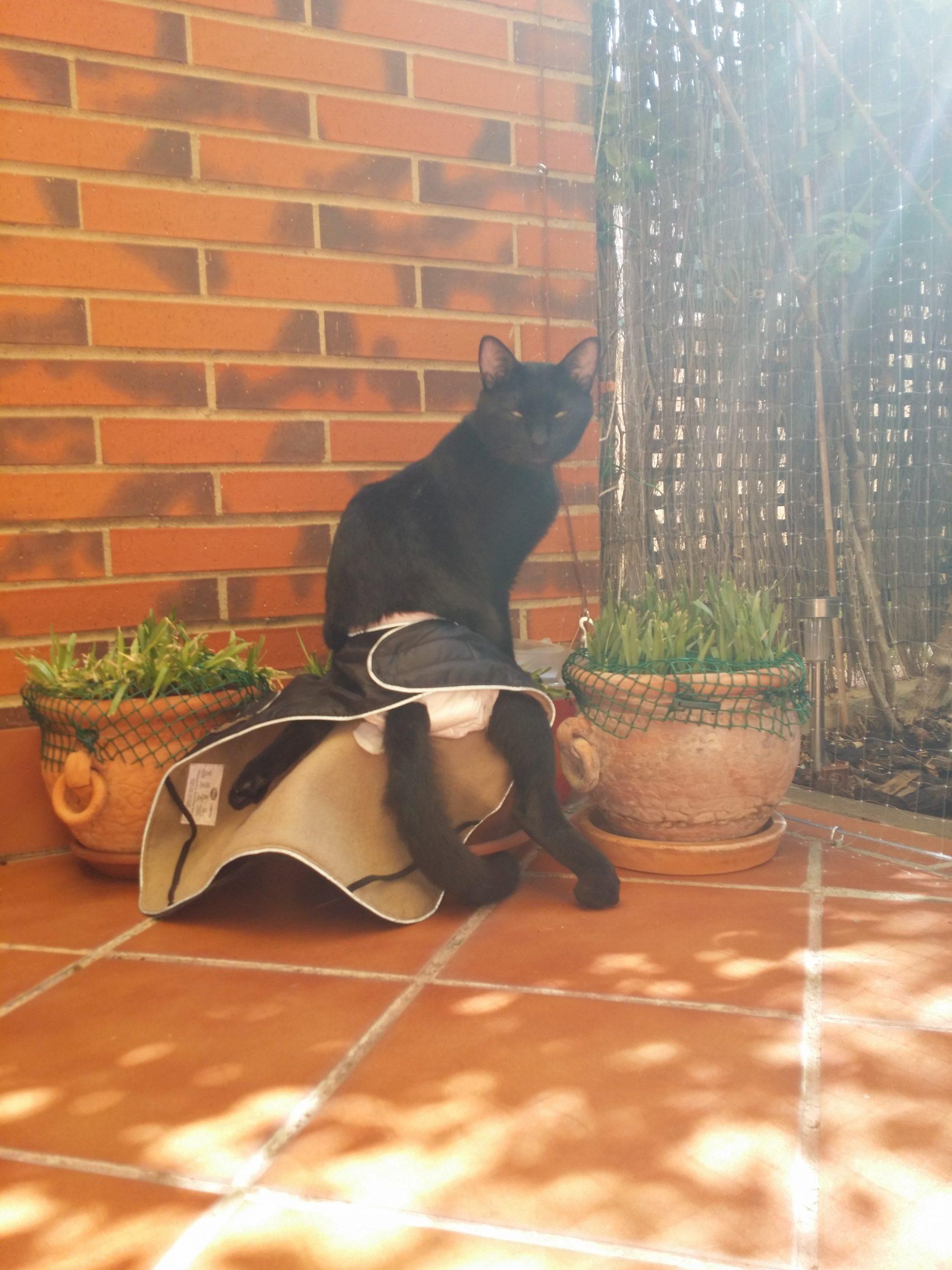 Mi gato paralitico