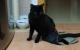 Mi gato paralítico Blaky con su capa