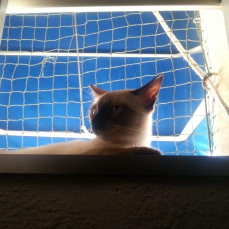 Instalación De Red Para Gatos En Ventana