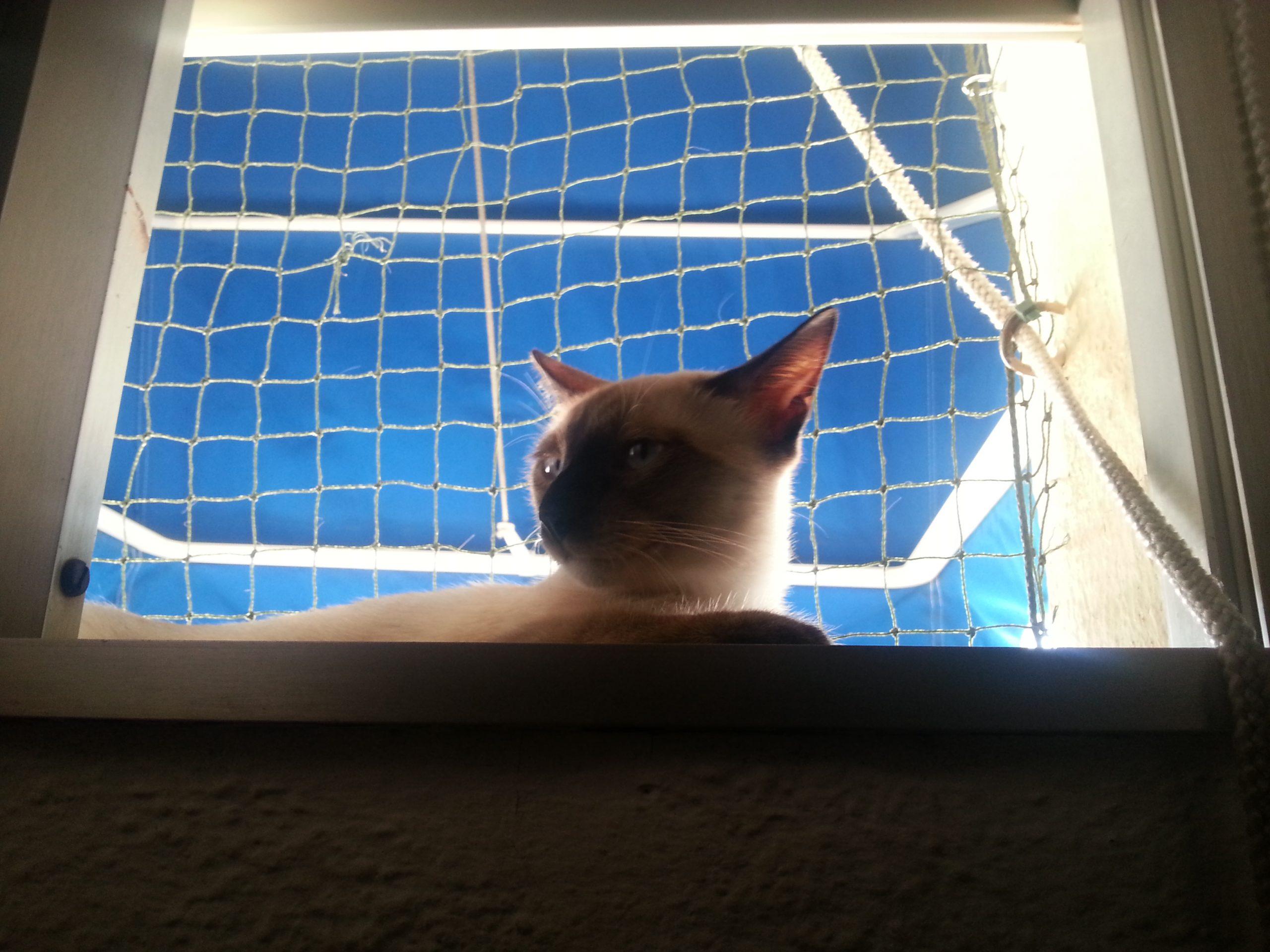 Redes Para Gatos En Ventana