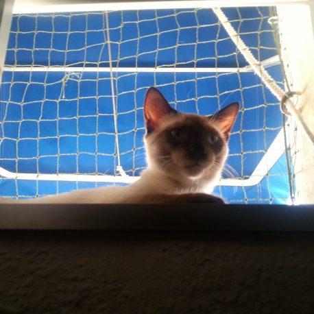 Mi Gato Sushi En La Ventana