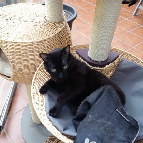 Mi gato paralitico con su capa