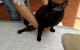 cambiando los pañales a mi gato paralítico Blaky