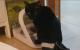Estreñimiento y megacólon en un gato paralítico