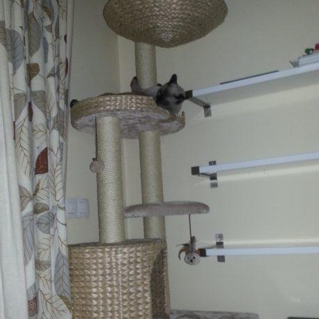 Mi rascador favorito, y de mis gatos