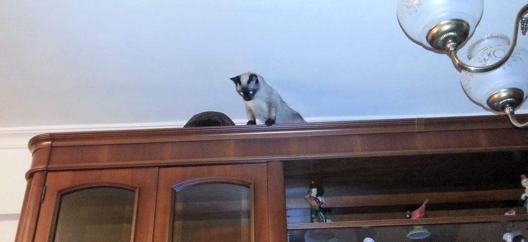 gato encima de mueble