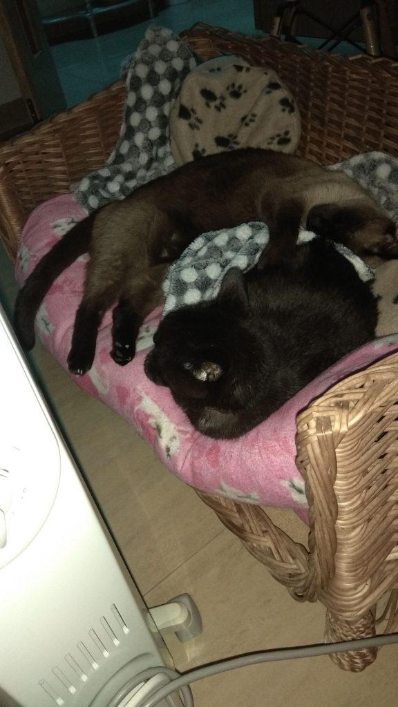 Mis gatos Blaky y Sushi dormidos frente al radiador