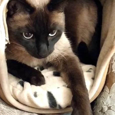 Mi gato Sushi adora este cojín térmico