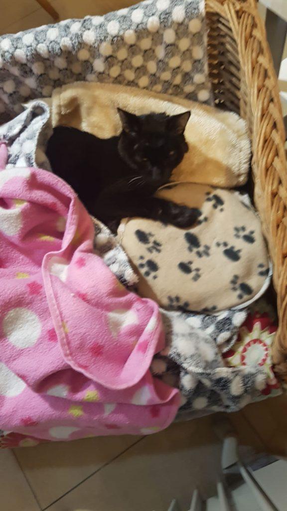 Mi gato Blaky abrazado a su cojín térmico