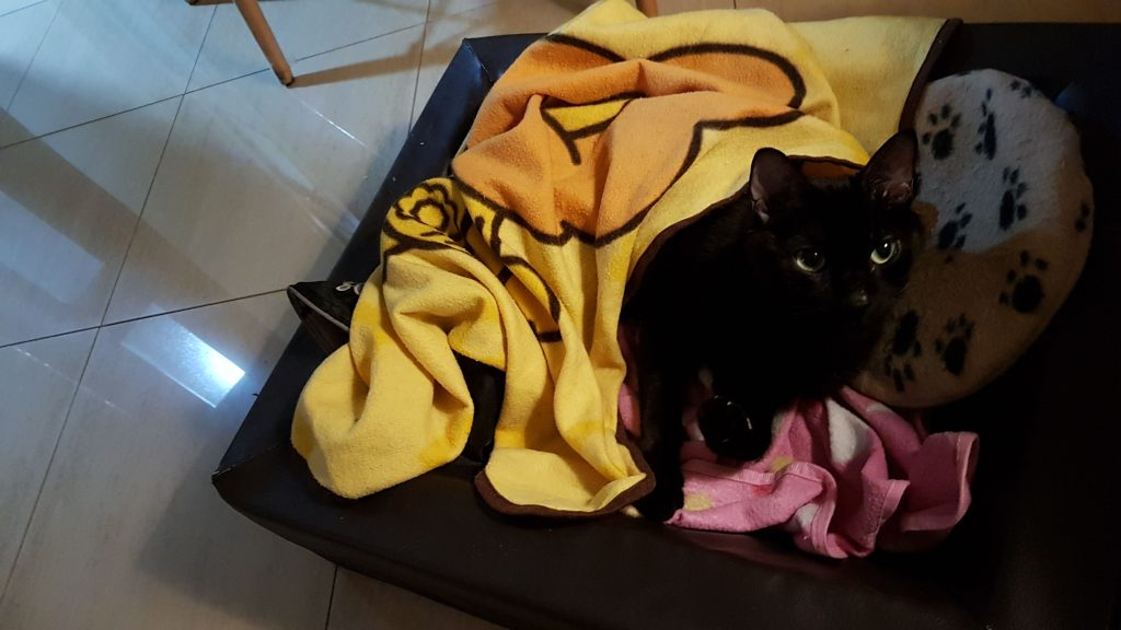 Mi gato Blaky en su camita y cojin calentador
