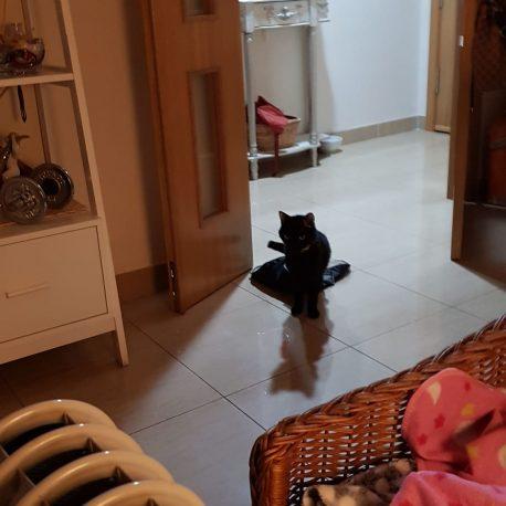 Mi gato Blaky hacia el radiador