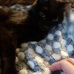 Mi gato Blaky con su mantita esponjosa