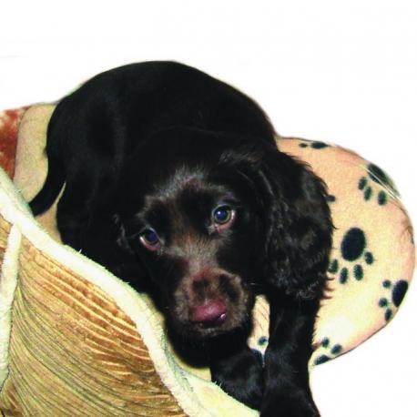 cojín térmico para nuestras mascotas