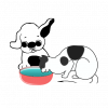 Bebederos. Cuencos Y Fuentes De Agua para mascotas