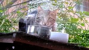 gatito callejero en frío invierno, comiendo
