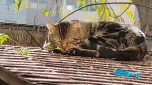 gatito callejero en frío invierno,  dormidito