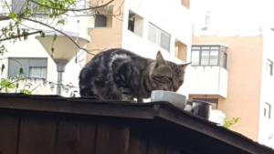 gatito callejero en el tejado