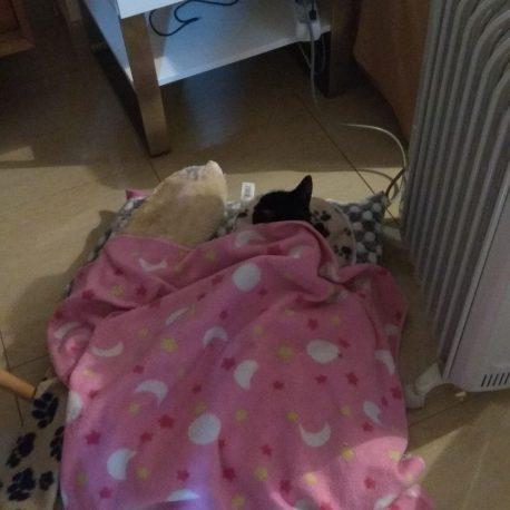 mi gato Blaky junto al radiador