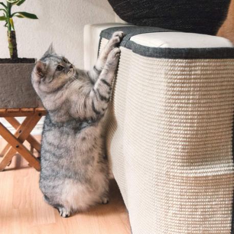Sofá protegido, gato feliz