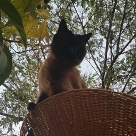 mi gato protegido con la red para gatos