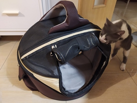 Mi gato Miko curioseando su transportín