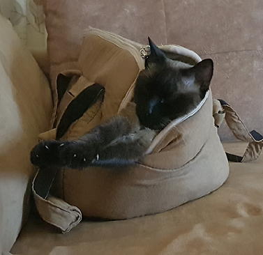 Mi gato Sushi en su bolso