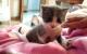 Miko, mi gatito bebé