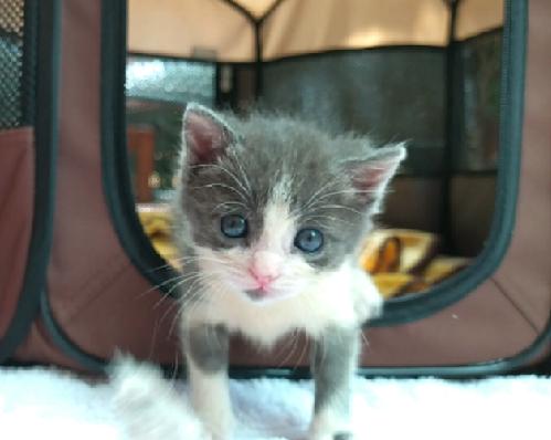 Miko, mi gatito bebé, en su parque corralito